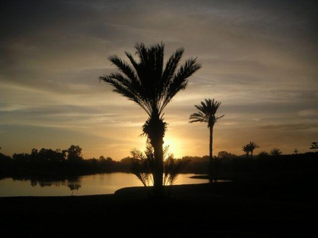 palmier  ag.jpg