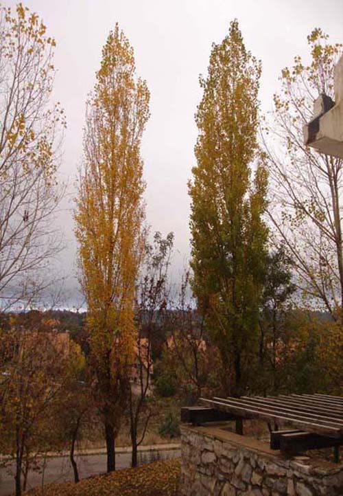 automne-ifrane-18-11-2006-.jpg