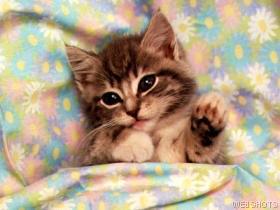 cats_209.jpg