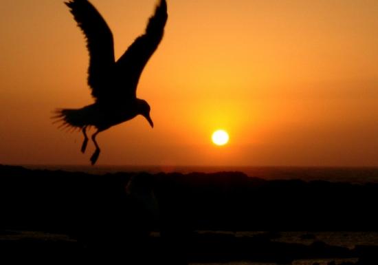 couche soleil et aylal.jpg